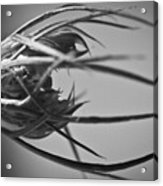 Sepal Structure Acrylic Print by Ryan Kelly