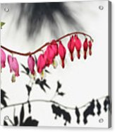 Shadow Hearts Acrylic Print by Steve Augustin