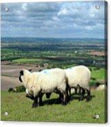 Sheep At Westbury Tor Acrylic Print by Kurt Van Wagner
