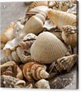 Shellfish Shells Acrylic Print by Bernard Jaubert