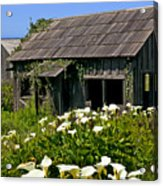 Shephers's Shack Acrylic Print by Garry Gay