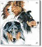 Shetland Sheepdogs Acrylic Print by Kathleen Sepulveda