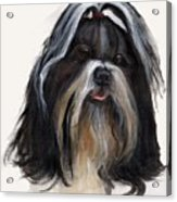 Shih Tzu Acrylic Print by Jimmie Trotter