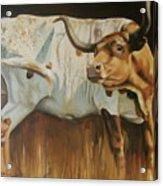 Shoo Fly Acrylic Print by Mary Leslie