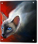 Siamese Cat 7 Painting Acrylic Print by Svetlana Novikova