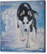 Siberian Husky Run Acrylic Print by Lee Ann Shepard