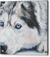 Siberian Husky Up Close Acrylic Print by Lee Ann Shepard