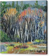 Signs Of Spring Acrylic Print by Donald Maier