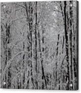 Silence Of Winter Acrylic Print by Gabriela Insuratelu