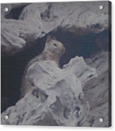 Silent Observer Acrylic Print by Pharris Art