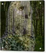 Silent Sentinel Acrylic Print by Priscilla Richardson