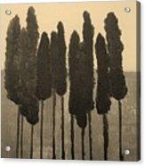 Skinny Trees In Sepia Acrylic Print by Marsha Heiken