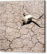 Skull In Desert 2 Acrylic Print by Kelley King