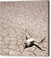 Skull In Desert Acrylic Print by Kelley King