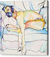 Sleeping Beauty Acrylic Print by Pat Saunders-White