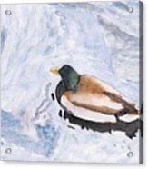 Snake Lake Duck Sketch Acrylic Print by Ken Powers