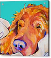 Snoozer King Acrylic Print by Pat Saunders-White