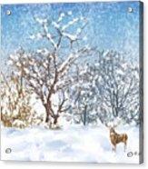 Snow Flurry Acrylic Print by Arline Wagner