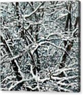 Snow Tree Acrylic Print by Nadi Spencer