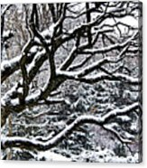 Snowfall And Tree Acrylic Print by Elena Elisseeva