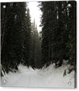 Snowy Pines Acrylic Print by Silvie Kendall
