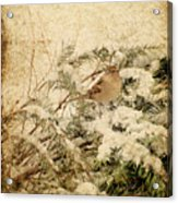 Sparrow In Winter I - Textured Acrylic Print by Angie Tirado