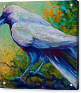 Spirit Raven Acrylic Print by Marion Rose