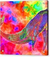 Spirit Whale Acrylic Print by Nick Gustafson