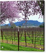 Spring Blossoms Near Calistoga Acrylic Print by Charlene Mitchell