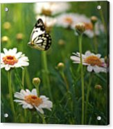 Spring In Air. Acrylic Print by Photos by Shmelly