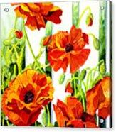 Spring Poppies Acrylic Print by Janis Grau
