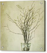 Spring Unfolds Acrylic Print by Priska Wettstein