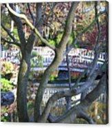 Springtime Bridge Through Japanese Maple Tree Acrylic Print by Carol Groenen