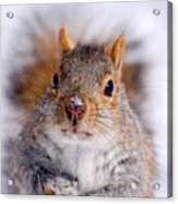 Squirrel Portrait Acrylic Print by Mircea Costina Photography