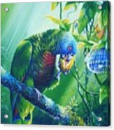 St. Lucia Parrot And Wild Passionfruit Acrylic Print by Christopher Cox