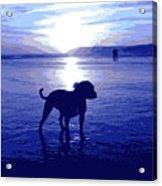 Staffordshire Bull Terrier On Beach Acrylic Print by Michael Tompsett