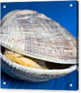 Steamed Clam Acrylic Print by Frank Tschakert
