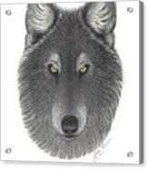 Stepinwolf Acrylic Print by Jackie Meyers