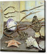 Still Life With Seashells And Pine Cones Acrylic Print by Ethel Vrana