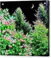 Still Of The Night Acrylic Print by Will Borden