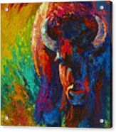 Straight Forward Introduction - Bison Acrylic Print by Marion Rose