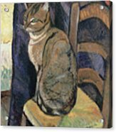 Study Of A Cat Acrylic Print by Suzanne Valadon