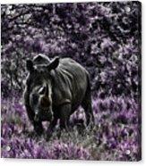 Styled Environment-the Modern Trendy Rhino Acrylic Print by Douglas Barnard