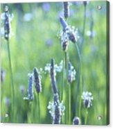 Summer Charm Acrylic Print by Aimelle