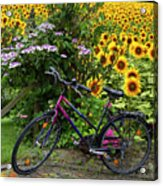Summer Cycling Acrylic Print by Debra and Dave Vanderlaan