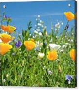 Summer Flowers Acrylic Print by Sophie De Roumanie