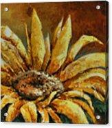 Sunflower Study Acrylic Print by Michael Lang