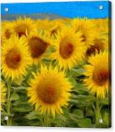 Sunflowers In The Field Acrylic Print by Jeff Kolker