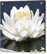 Sunlight On Water Lily Acrylic Print by Carol Groenen