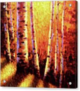 Sunlight Through The Aspens Acrylic Print by David G Paul